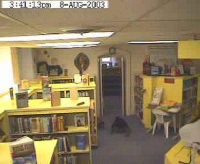 fantôme bibliothèque Willard