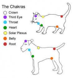 chakras des animaux