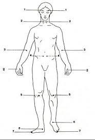 position de la magnétite dans le corps humain