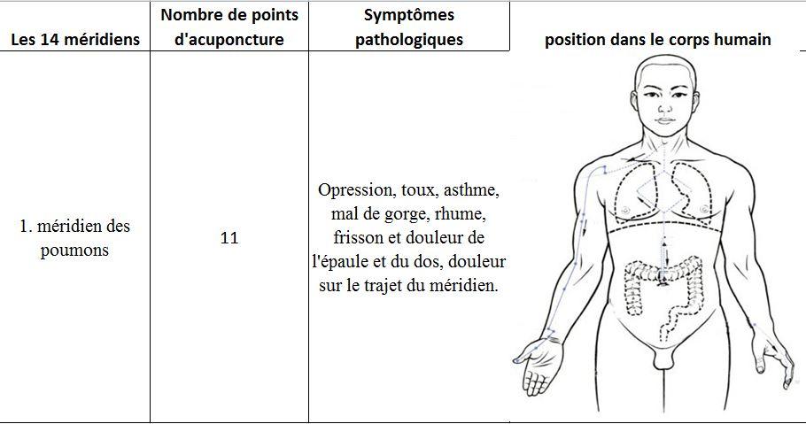 Meridien des poumons 1